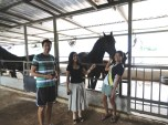 Visiting the Friesian broodmares.